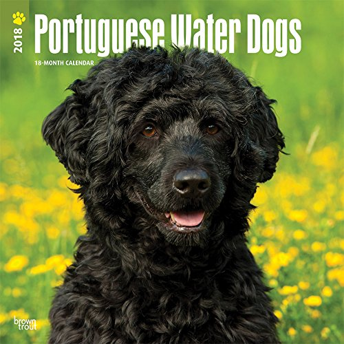 Portuguese Water Dogs 2018 12 x 12 Inch Monthly Square Wall Calendar, Animals Dog Breeds (Multilingual Edition)