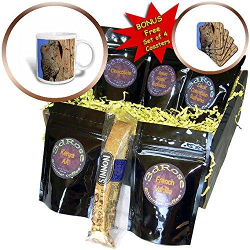 3dRose Danita Delimont - Birds - Northern Flicker, Colaptes auratus, Red-shafted, at nest site, Oregon - Coffee Gift Baskets - Coffee Gift Basket (cgb_259934_1) (Oregon Coffee Gift Baskets)