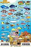 "Aruba Reef Creatures Guide Franko Maps Laminated Fish Card 4"" x 6"""