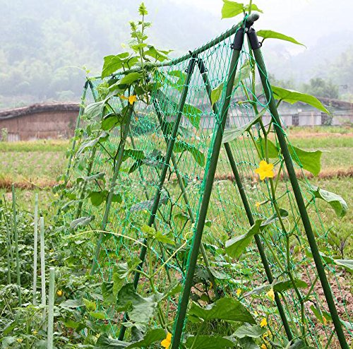 Amgate Nylon Trellis Netting Plant Support For Climbing