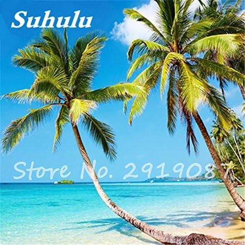 Roystonea regia/ /Palmensamen Tree Seeds Da Wang YE Outdoor Bonsai Pflanzen SEMILLAS DE Arboles Royal Palm tohum Busch 5/PCS 15