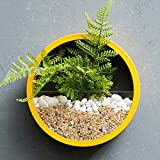 Floating Shelves Tea Shop Wall Green Plants Potted Wall-mounted Adornment Restaurant Hotel Shop Pendant Color Optional (Color : Yellow, Size : 20cm)