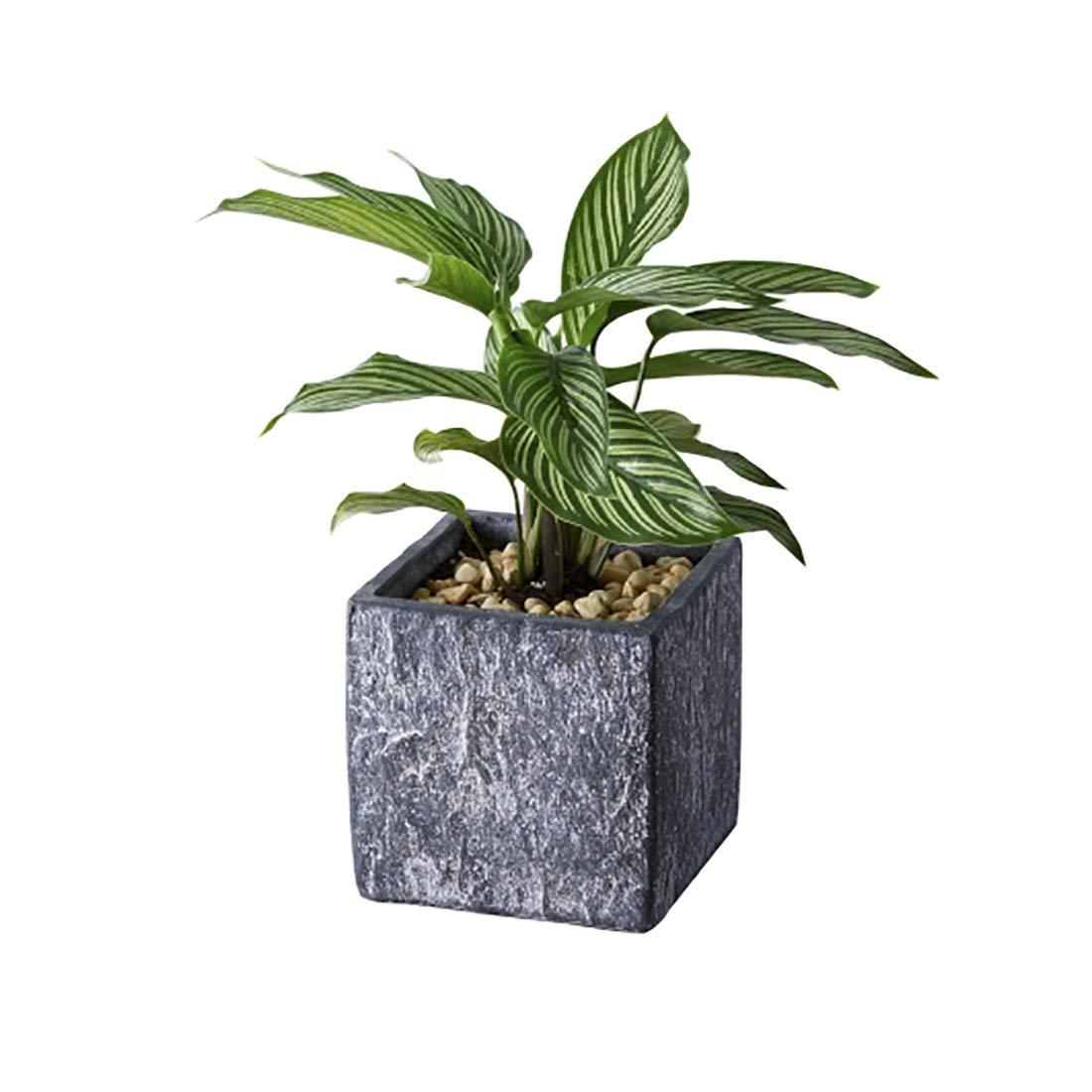 Zhi lian& 鉢植えポット通気性花鉢 (色 : Gray, サイズ さいず : 15x15x15cm) B07QMBHCZF Gray 15x15x15cm