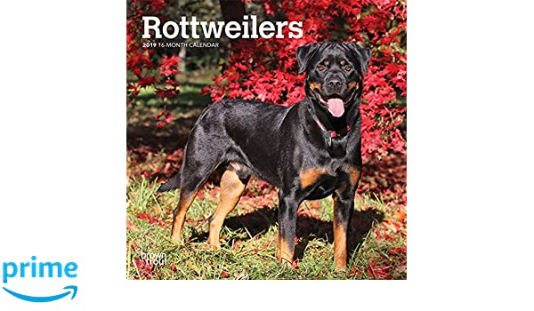 Amazon com: Rottweilers 2019 7 x 7 Inch Monthly Mini Wall