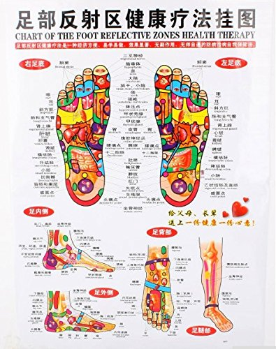 Amazon com chinese english chart of foot reflective zones therapy