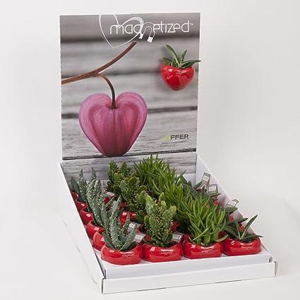 Imanes de macetas con plantas pequeñas de Best4garden ...