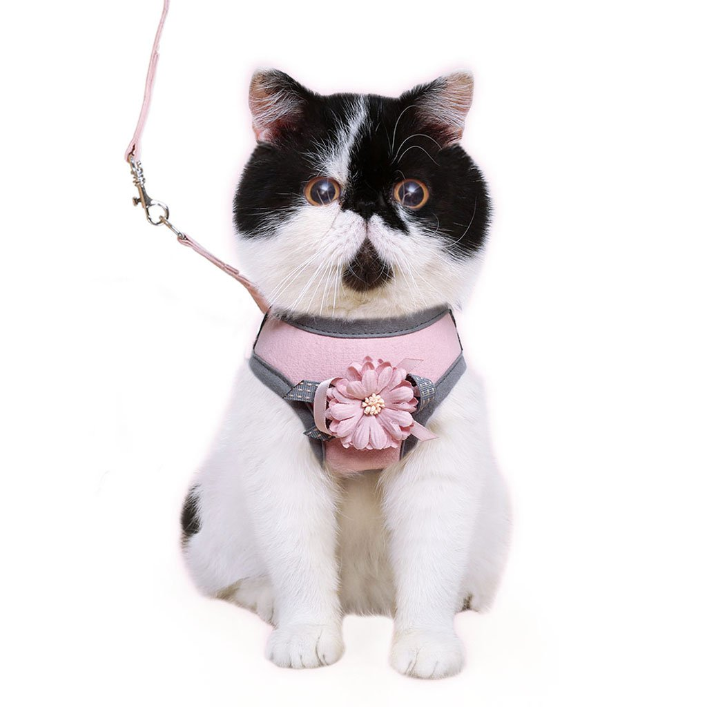 TLMY Vest Type Cat Leash Pet Chest Strap To Prevent Escape Traction Rope Pet Chain (color   Pink, Size   Chest circumference 36-43CM)