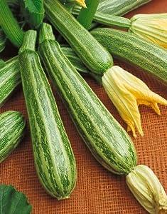 Amazoncom Zucchini Italian Striped Summer Squash Seeds
