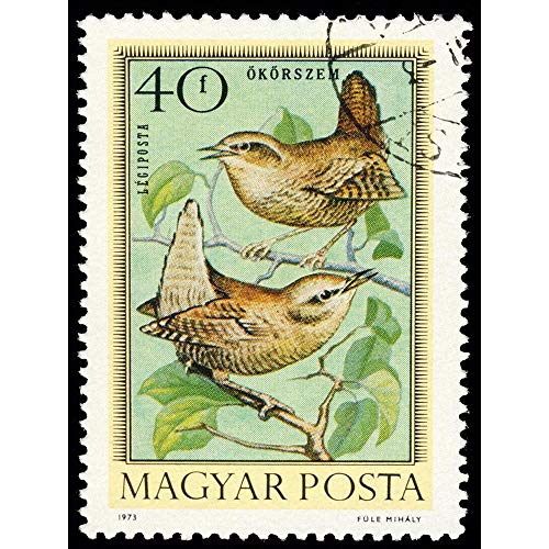 (Wee Blue Coo Postage Stamp Hungary 40 Forint Bird Wren Jenny Unframed Wall Art Print Poster Home Decor Premium )