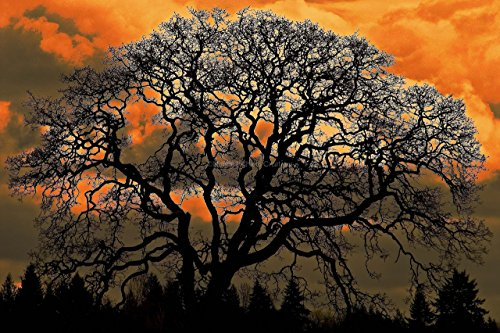 Dramatic Cloudy Sunset Oak Tree Photography Unframed Black Silhouette Orange Dark Masculine Wall Art Nature Landscape Photographic Print 8x12 12x18 16x24 20x30 (National Arts Club Halloween)
