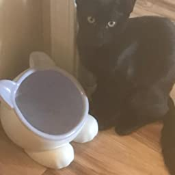 Amazon Com Vivipet Raised Ceramic Cat Water Food Big Head Bowl Dish Tilt Angle Protect Cat S Spine Stress For Cat Teal Pet Supplies