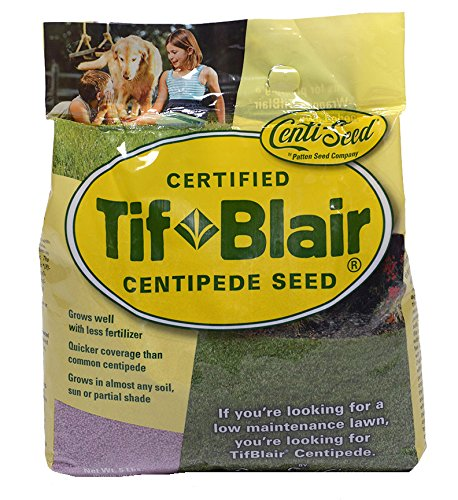TifBlair Centipede Grass Seed (5 Lb.) Direct From the Farm by Patten Seed Company