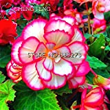 On Sale!!! 12 Kinds 100pcs Begonia Seeds Rare Fower Seeds For Bonsai Home * Garden Flor Potted Plants Air Purification Flowers