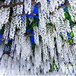 Together-life-24-Pack-Artificial-Wisteria-Vine-Rattan-Hanging-Garland-Silk-Flowers-String-for-Wedding-Events-Garden-Decor-Party-Decoration-36-Feet-White