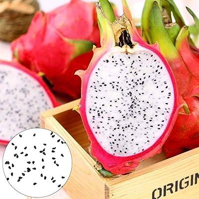 Gaweb-Seed Collections Organic Vegetable Seeds Edible Planting, 200Pcs White Flesh Pitaya Seeds Nutritive Delicious Fruit Plant Garden Decor - Pitaya Seeds : Garden & Outdoor