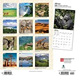 Africa 2020 12 x 12 Inch Monthly Square Wall