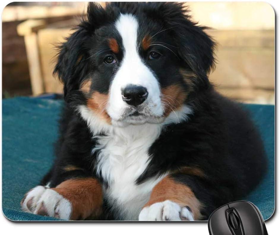 Amazoncom Mouse Pad Bernese Mountain Dog Puppy Berner