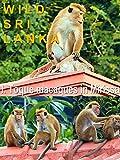 Wild Sri Lanka. I. Toque macaques in Mirissa