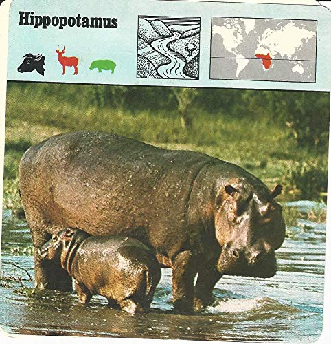 (1975 Editions Rencontre, Animals Card, 03.67 Hippopotamus)
