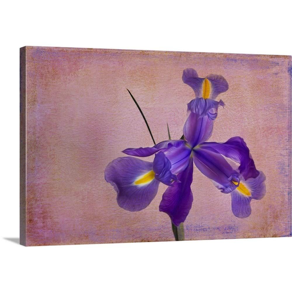 ボブラウスギャラリー‐ Dutch Iris II 60