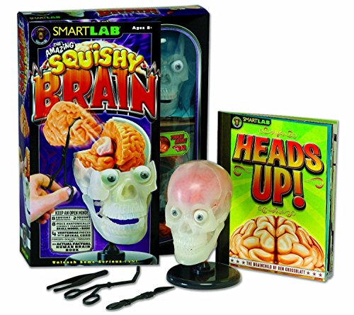 The Amazing Squishy Brain Hands-on anatomy reinforces learning Anatomically correct model, shaped from a real human brain. For Ages 8+