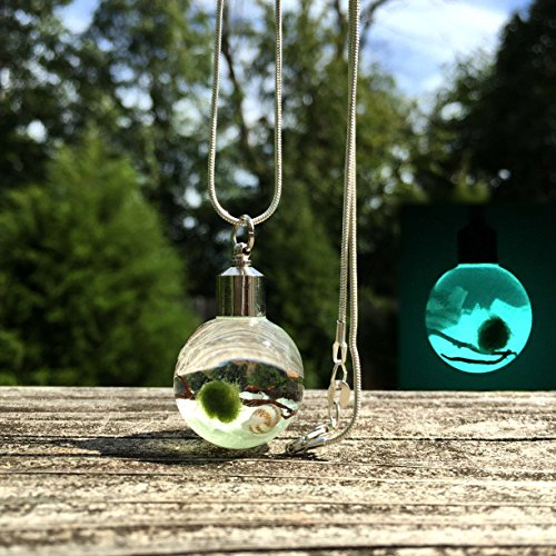 Glow In The Dark Marimo Moss Ball Necklace Live Terrarium Necklace Wearable Plant Necklace Plant Fashion Accessories (Fan Pendant Necklace)