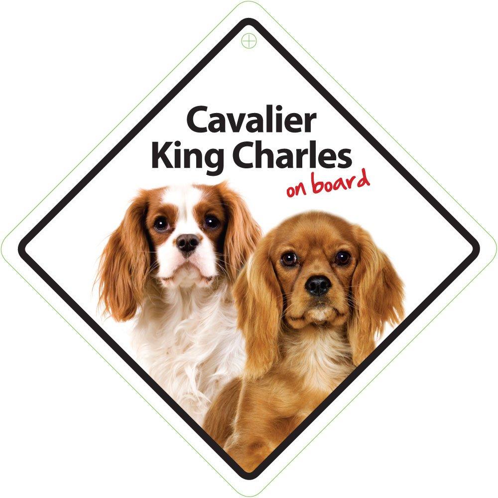 14 x 14 cm Magnet /& Steel 23-3651 Se/ñal Ventosa Cavalier King Charles on Board