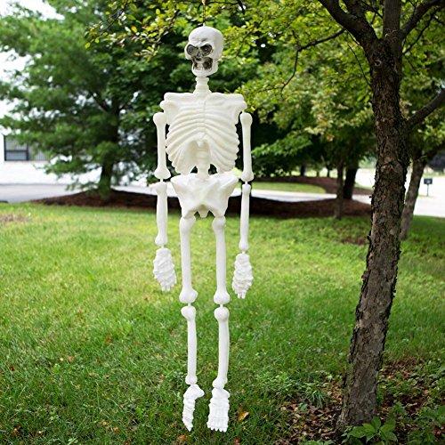 Rhode Island Novelty ZHSKGL5 Skeleton