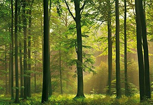 (Wallpaper Washington Wallcovering Idealdecor Wall Murals & Door Murals Autumn Forest 216)