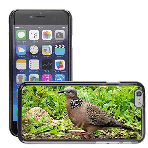 "Bild Hart Handy Schwarz Schutz Case Cover Schale Etui // M00134225 Dove Vogel Close // Apple iPhone 6 PLUS 5.5"""
