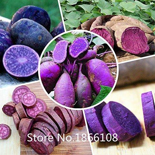 2015 High Quality.100 Seeds/Pack.Annual Fruit and Vegetable Seeds Molokai Purple Sweet Potato.DIY Home Garden&Bonsai Plant Seeds
