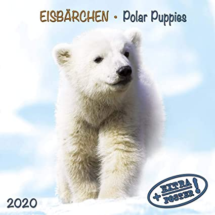 Calendrier Pole.Calendrier 2020 Ours Polaire Pole Nord Ours Blanc