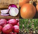 David's Garden Seeds Collection Set Onion SL4343 (Multi) 4 Varieties 2000 Seeds (Open Pollinated, Organic)