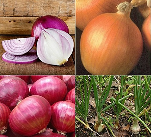 David's Garden Seeds Collection Set Onion SL4343 (Multi) 4 Varieties 2000 Seeds (Open Pollinated, Organic) by David's Garden Seeds