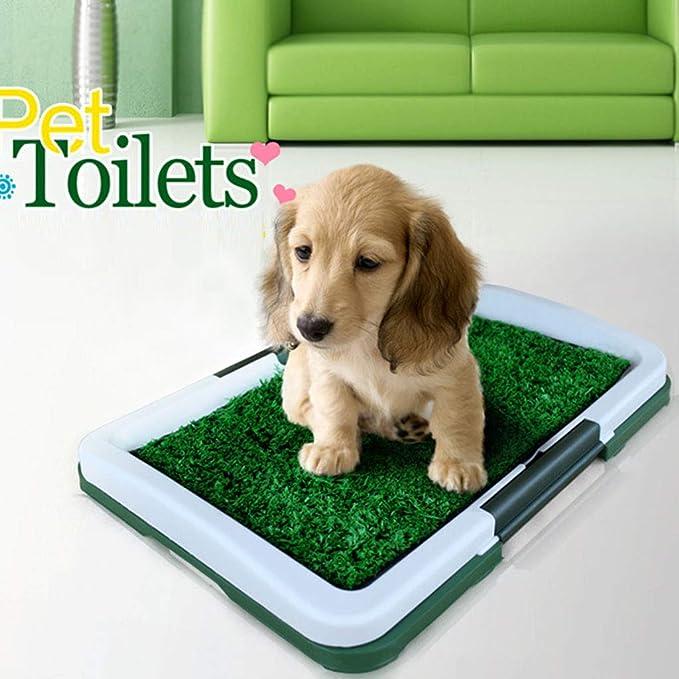 CL- Pet Potty- Pet Toilet Cachorro WC Cachorro Césped Orina de Perro Orina de Cama Adecuado para Perros pequeños SY: Amazon.es: Hogar