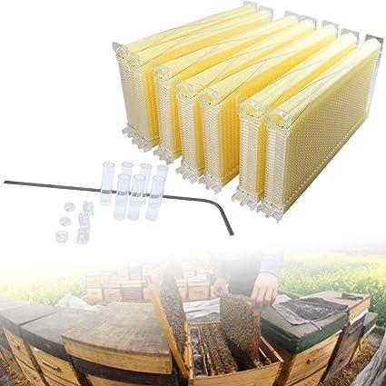 Amazon.com : 7x Auto Flow Honey Beehive Frames Kit Beekeeping Honey ...