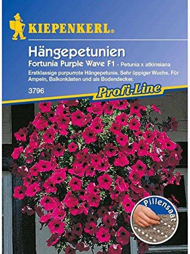 Petunia grandiflora Hängepetunien Fortunia Purple Wave purpurviolett Pillensaat