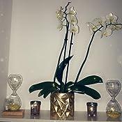 D/écoration en Verre sablier /à Paillettes 20cm Or Midnight FEERIC CHRISTMAS