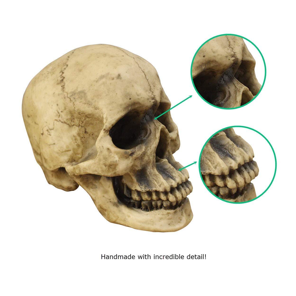 Amazon Wall Charmers Life Size Human Skull 85 Realistic