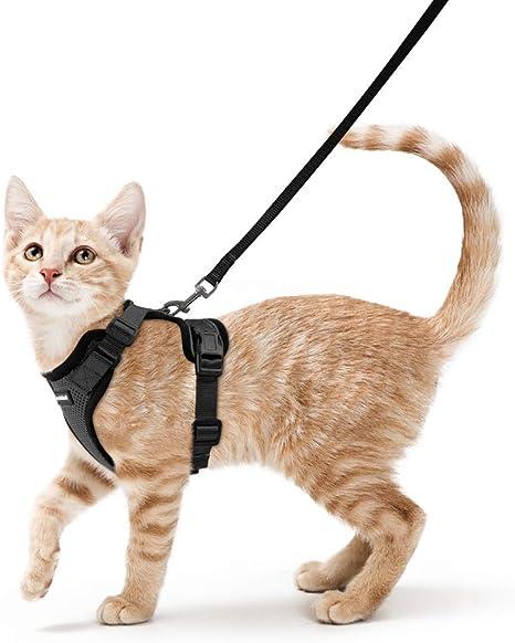 Amazon.com: Rabbitgoo - Arnés y correa para gato, a prueba ...