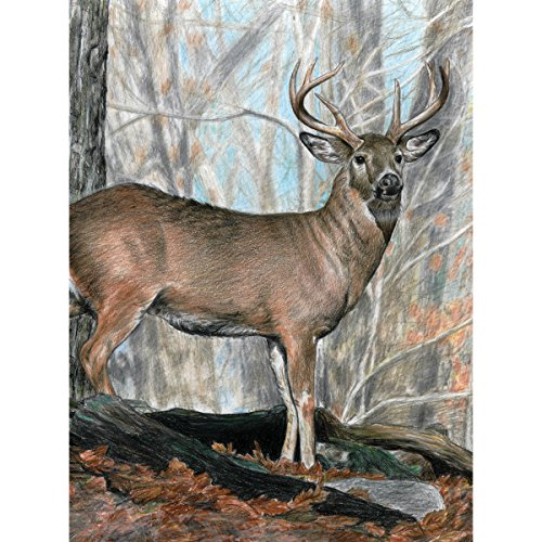 Color Pencil By Number Kit 8.75X11.75-Whitetail Buck