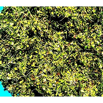 1 CUP LIVE DUCKWEED (LEMNA MINOR) : Aquatic Plants : Garden & Outdoor