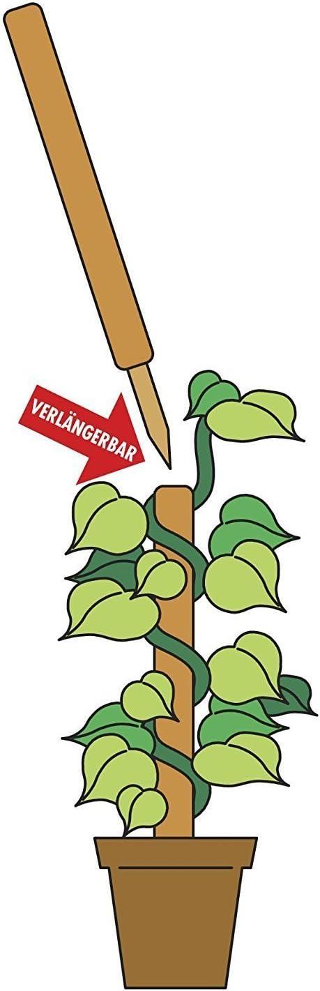 Solagua Palo de Fibra de Coco Plantas Trepadoras Guía para Plantas ...