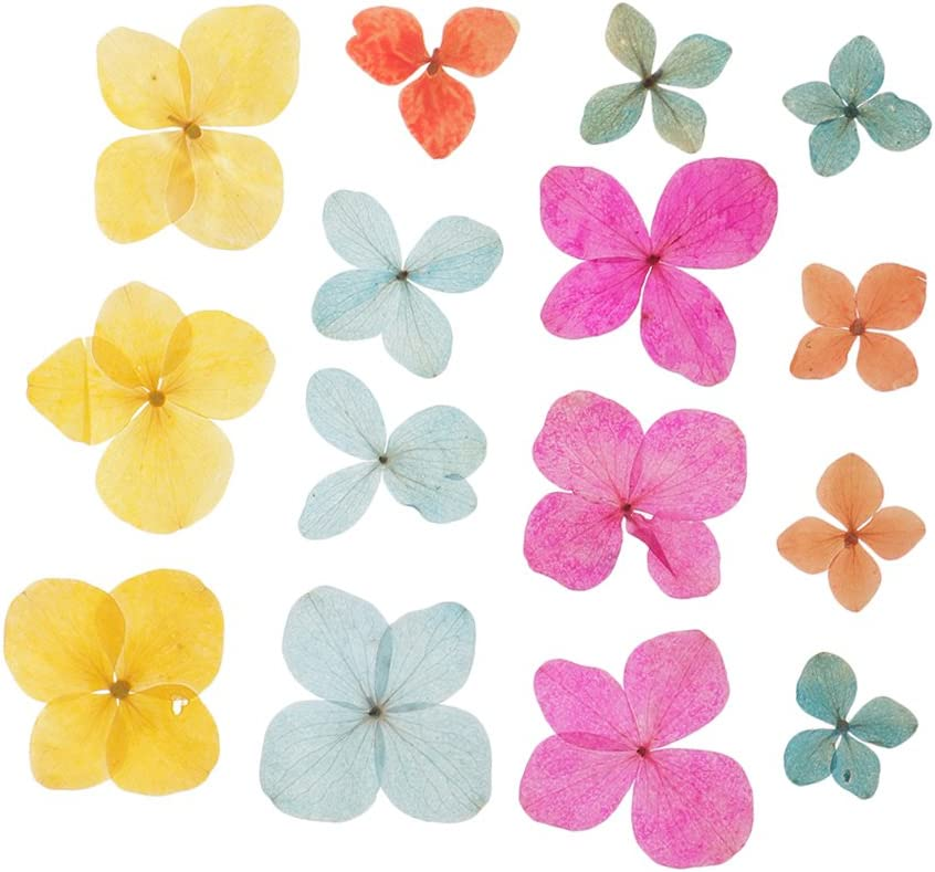 6Pc Real Pressed Leaves Natural Organic Dried Flowers DIY Arts Floral Decors