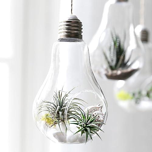 Glass Bulb Terrarium