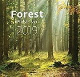 Forest Wall Calendar - Calendars 2018 - 2019 Calendar - Nature Wall Calendar -Photo Calendars - Photo Calendar By Helma