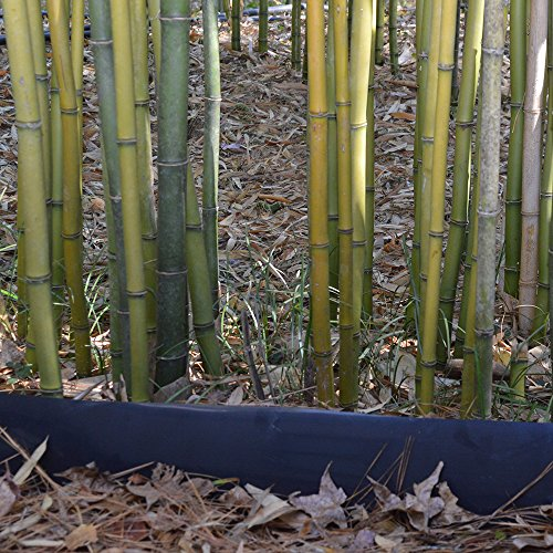 Bamboo Shield – 50 Foot Long X 30 Inch Wide 80mil Bamboo Root Barrier/Water Barrier by Bamboo Shield (Image #4)