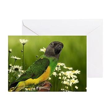 Amazon cafepress senegal parrot birthday card greeting cafepress senegal parrot birthday card greeting card note card birthday card m4hsunfo