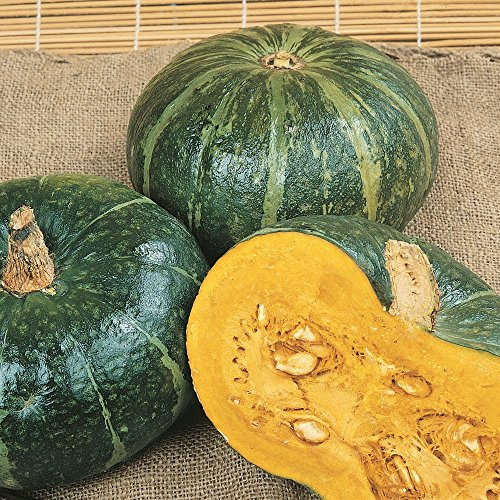 40 buttercrop Burgess Winter Squash Seeds - everwilde Farms Mylar Seed Packet (Co Burgess Seed Plant And)