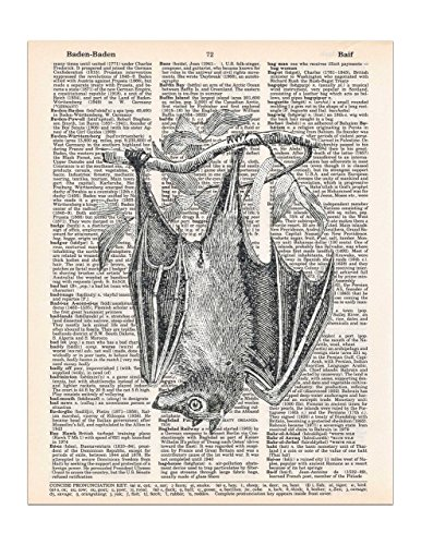 Hanging Bat Dictionary Page Print, Halloween Gothic Decor, 8x11 UNFRAMED (Halloween Bat Art)